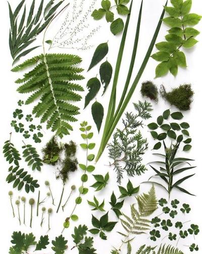 Various leaves: fern, oak, ivy, cedar