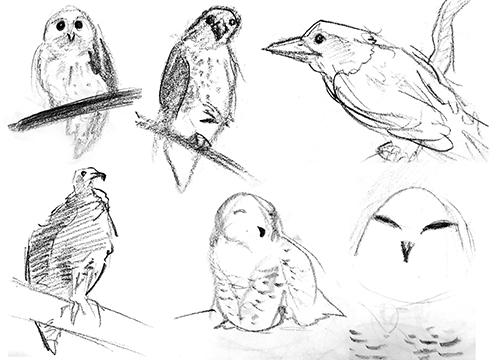 Zoo_Birds.jpg