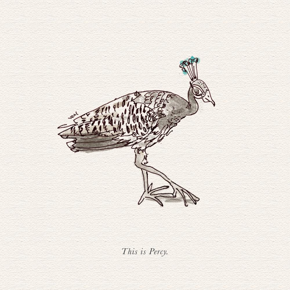 peacock-01.png