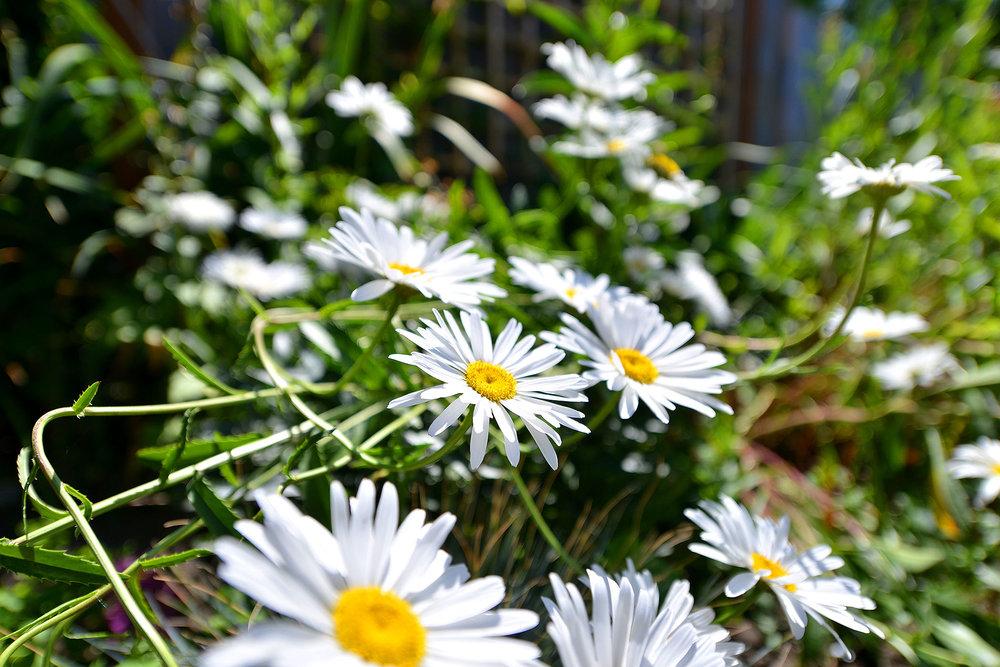Flower Vignette.jpg