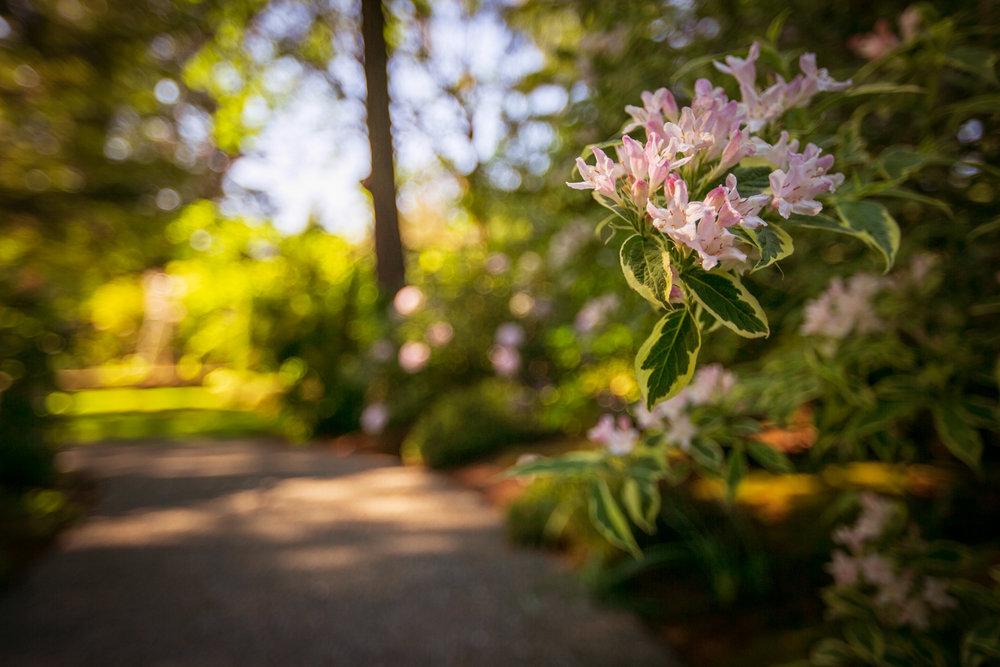 1259 Garden Gate-50.jpg