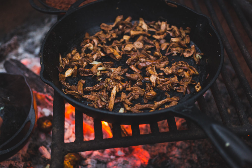 cooking chanterelles over the fire