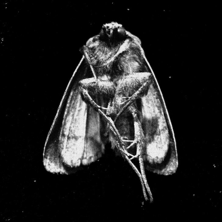 Medina/Walsh - Moth Funeral (Hanged Man Records)
