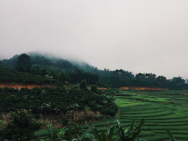 The idyllic scene of coffee farms in Yunnan province