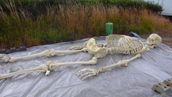 skeleton_06.jpg