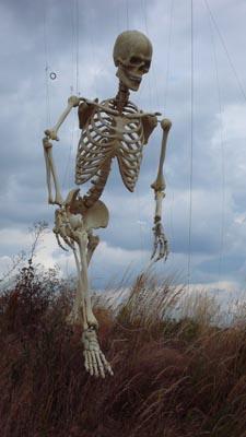 skeleton_13.jpg