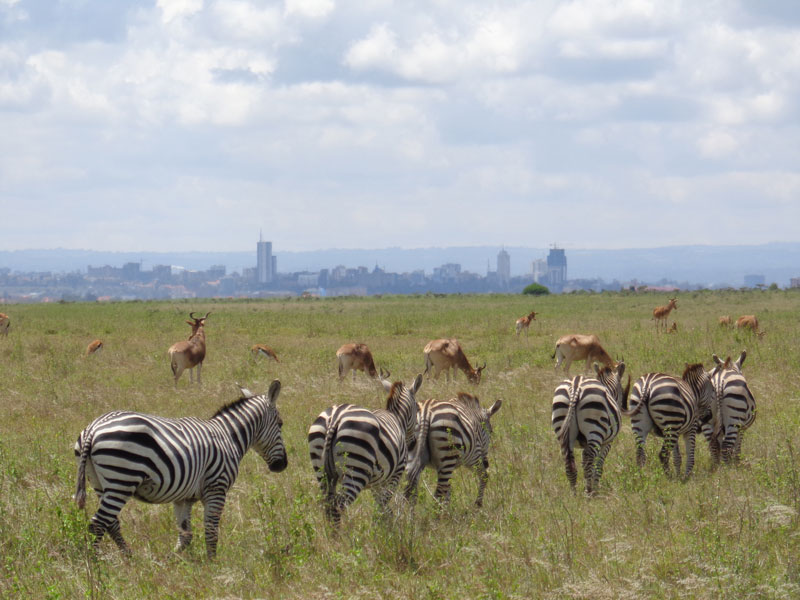zebrasandnairobi.jpg