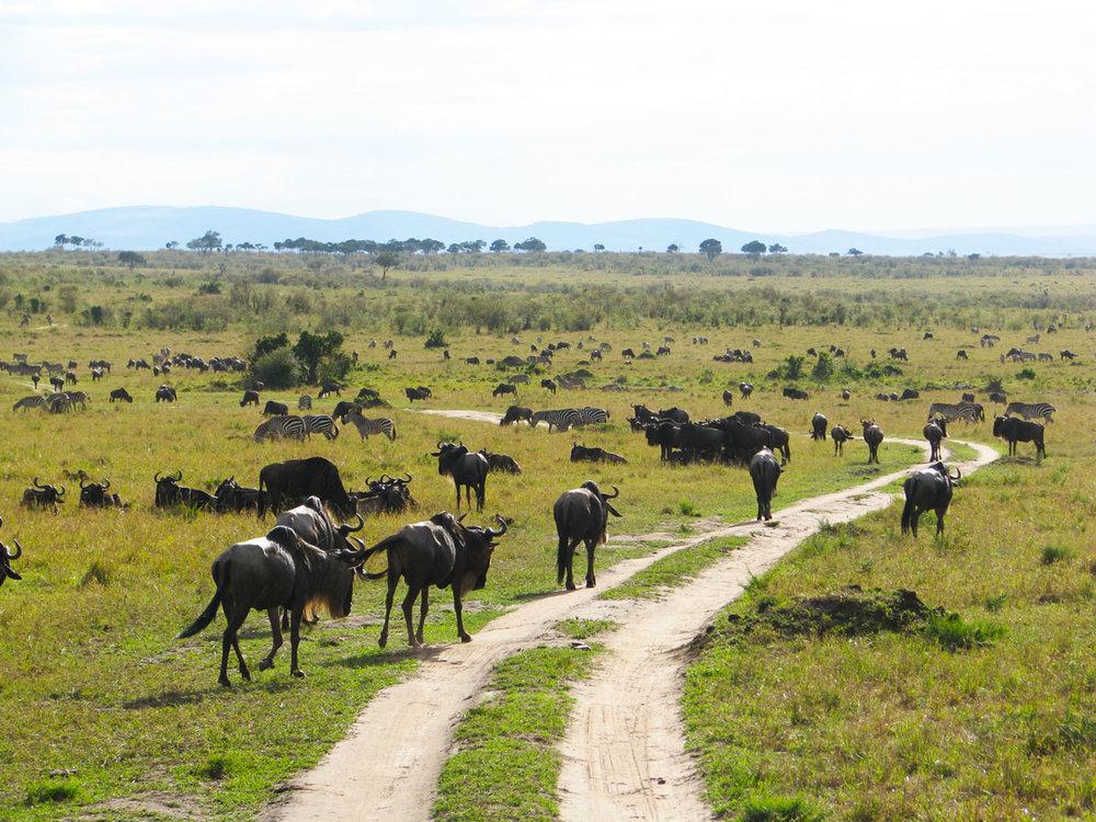 パッケージD - 国境超えて、ケニア・タンザニア8日間