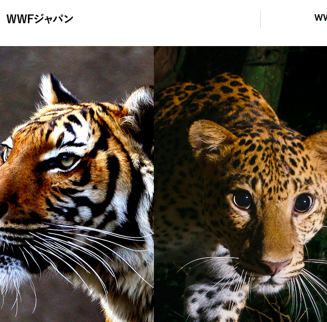 WWF Japan - Tailor-made curriculum based on advanced expression exercises (e.g. improvisation, mini-conferences, thinking in English) and topics related to environmental conservation.