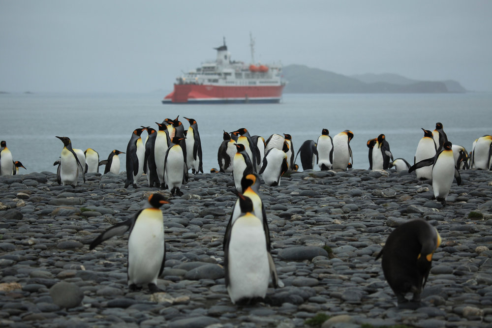 King Pengiuns and the M/S Expedition, South Georgia. Image:  Liam Quinn