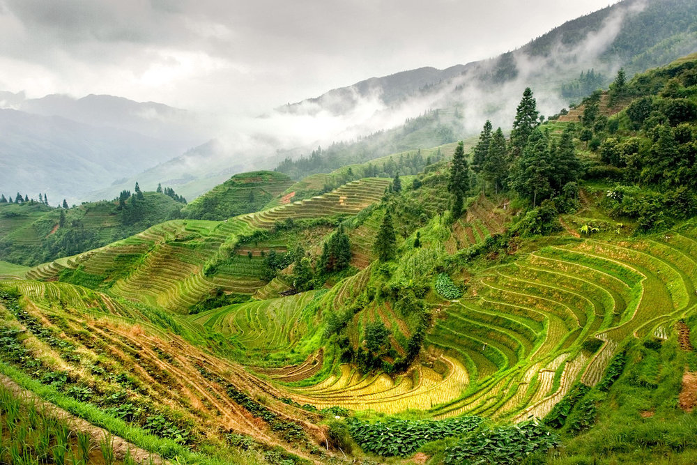 Rice terraces at Longsheng. Photograph  Jack French