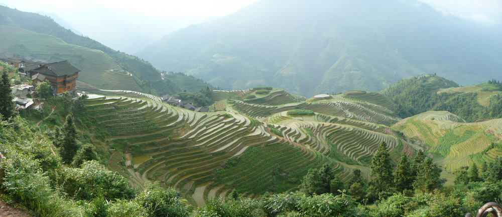 Flooded rice terraces looking terrific. Photograph  Brian Sterling