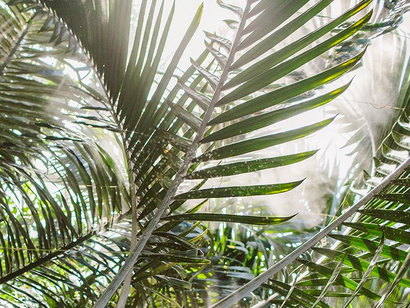 botanicalgardens5