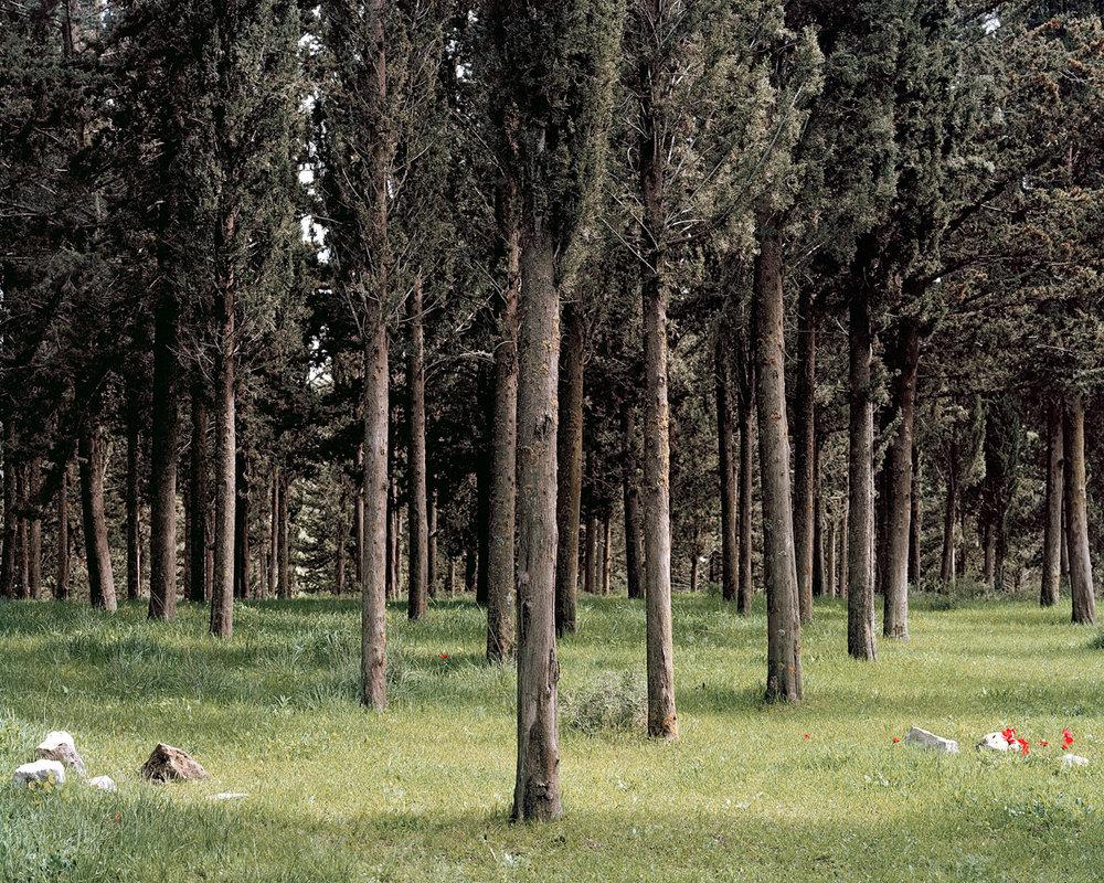 06 Cypress Soldiers.jpg