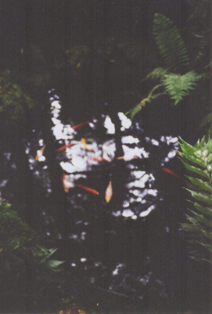 _palm_3.jpg