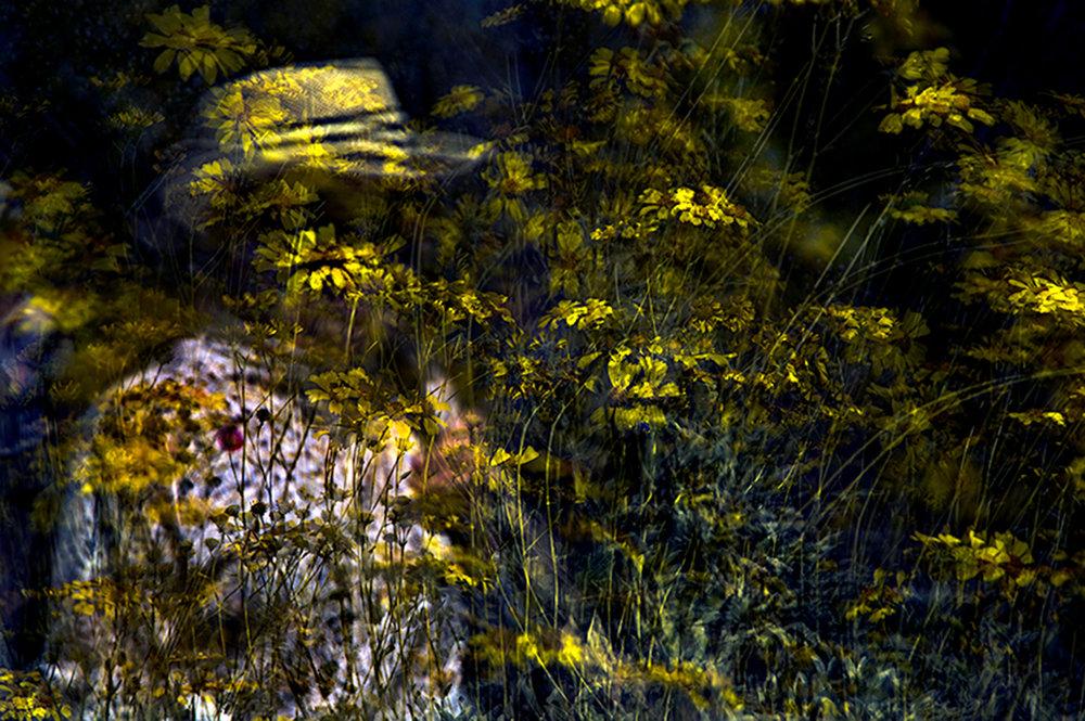 Darryll Schiff 7 Amarillo.jpg