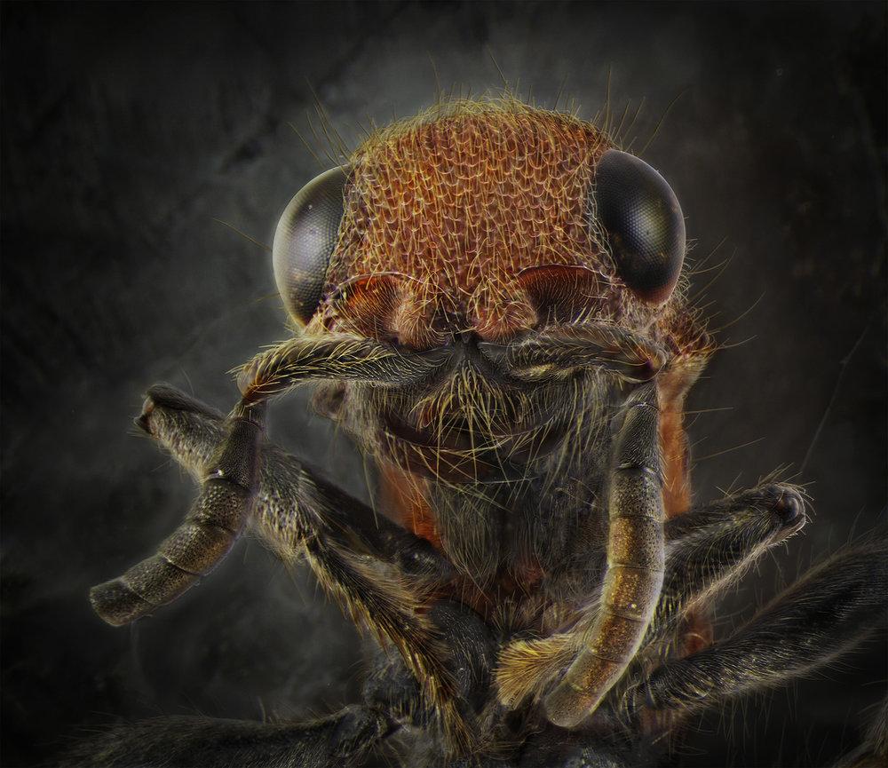 Velvet Ant.jpg