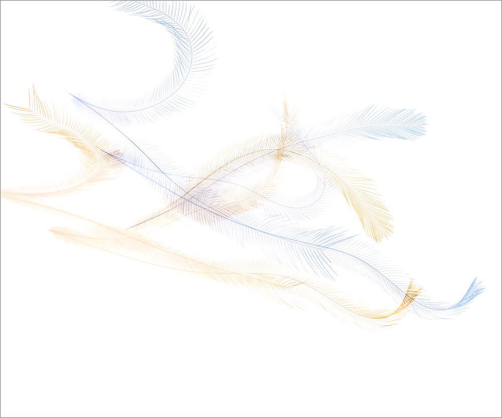 Threshold_Emu_Fall_III.jpg