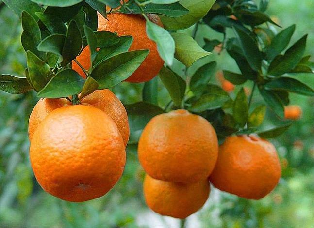 mandarin frame (2).jpg