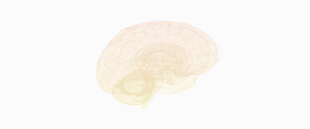 Votre cerveau est merveilleux. - Nous oublions souvent que notre organisme est régi par notre cerveau, ce chef d'orchestre invisible aux capacités incroyables.