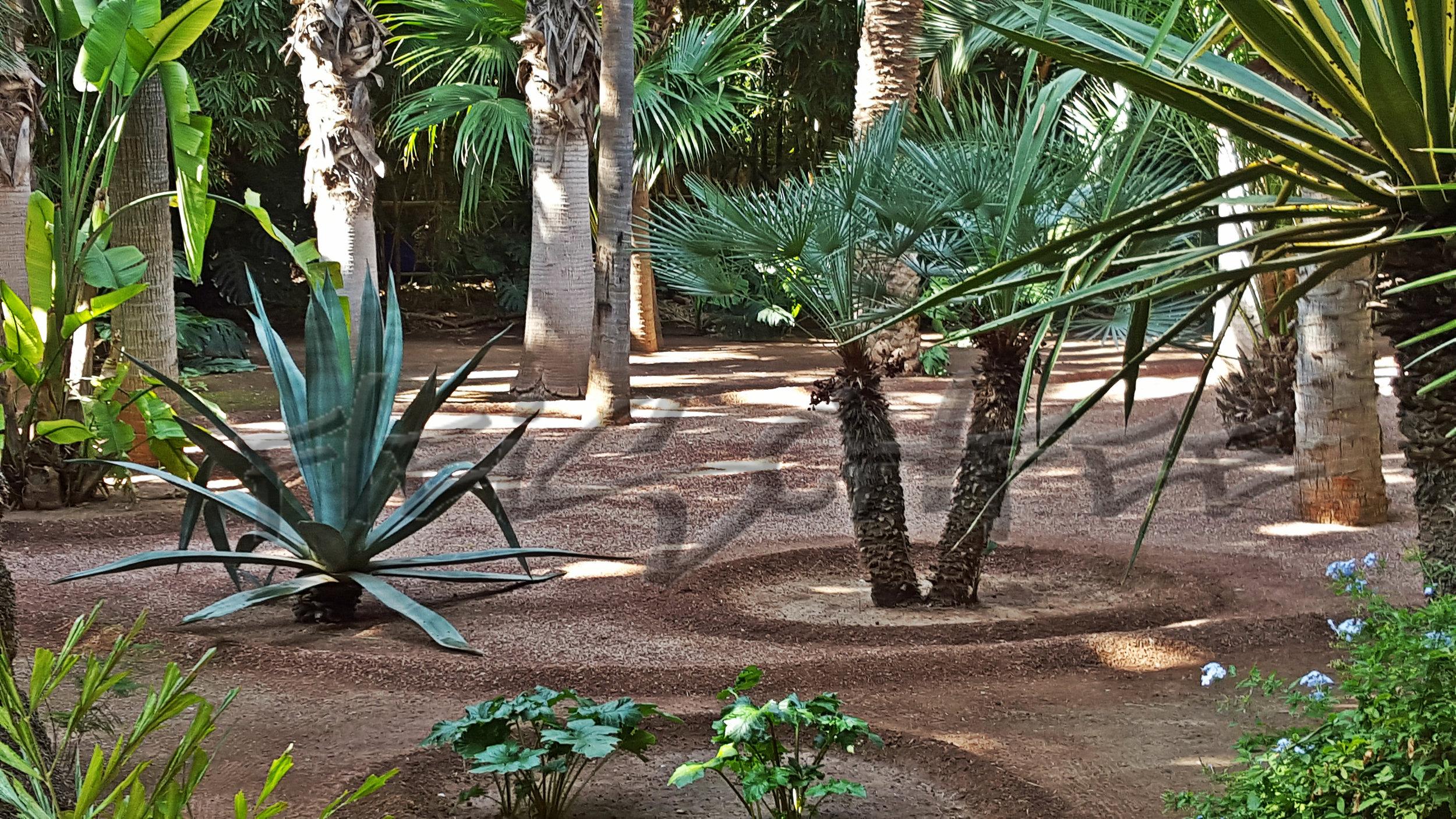 jardin-majorelle-baume