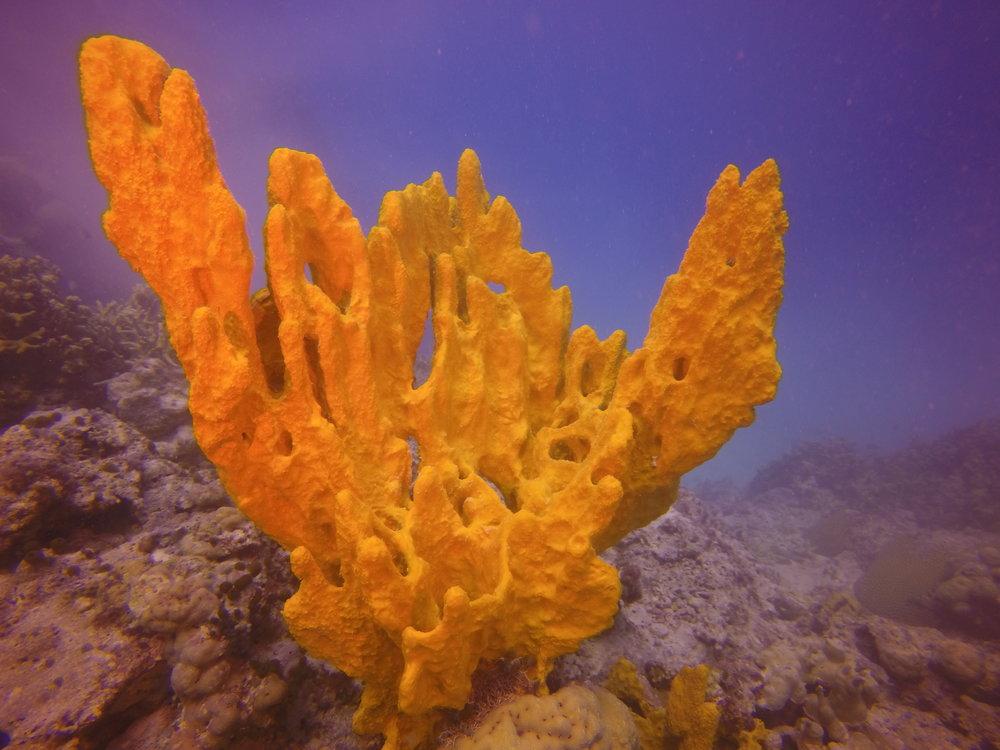 """""""De-Fog"""" Sponge, photo by John Andon"""