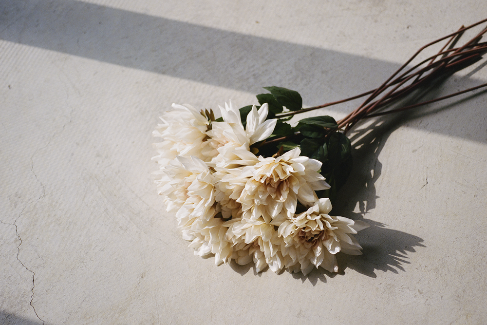 champagnedahlias_lres.png