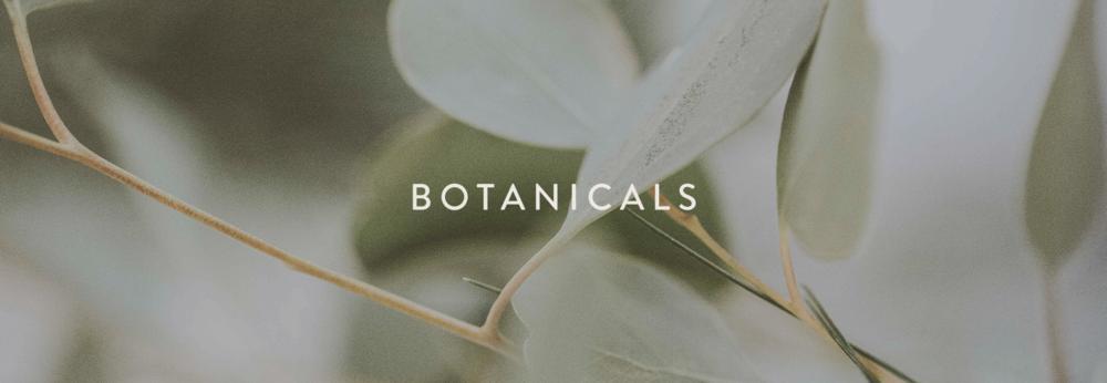 SPRIG-site-botanicalsbanner.png