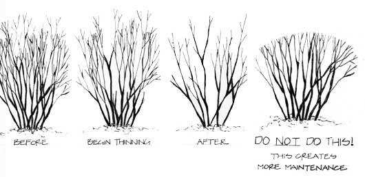 Ornamental Grasses Pruning Proper pruning tips natures way landscaping workwithnaturefo