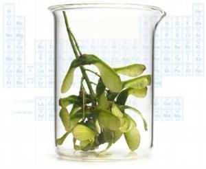 beaker+plant.jpg