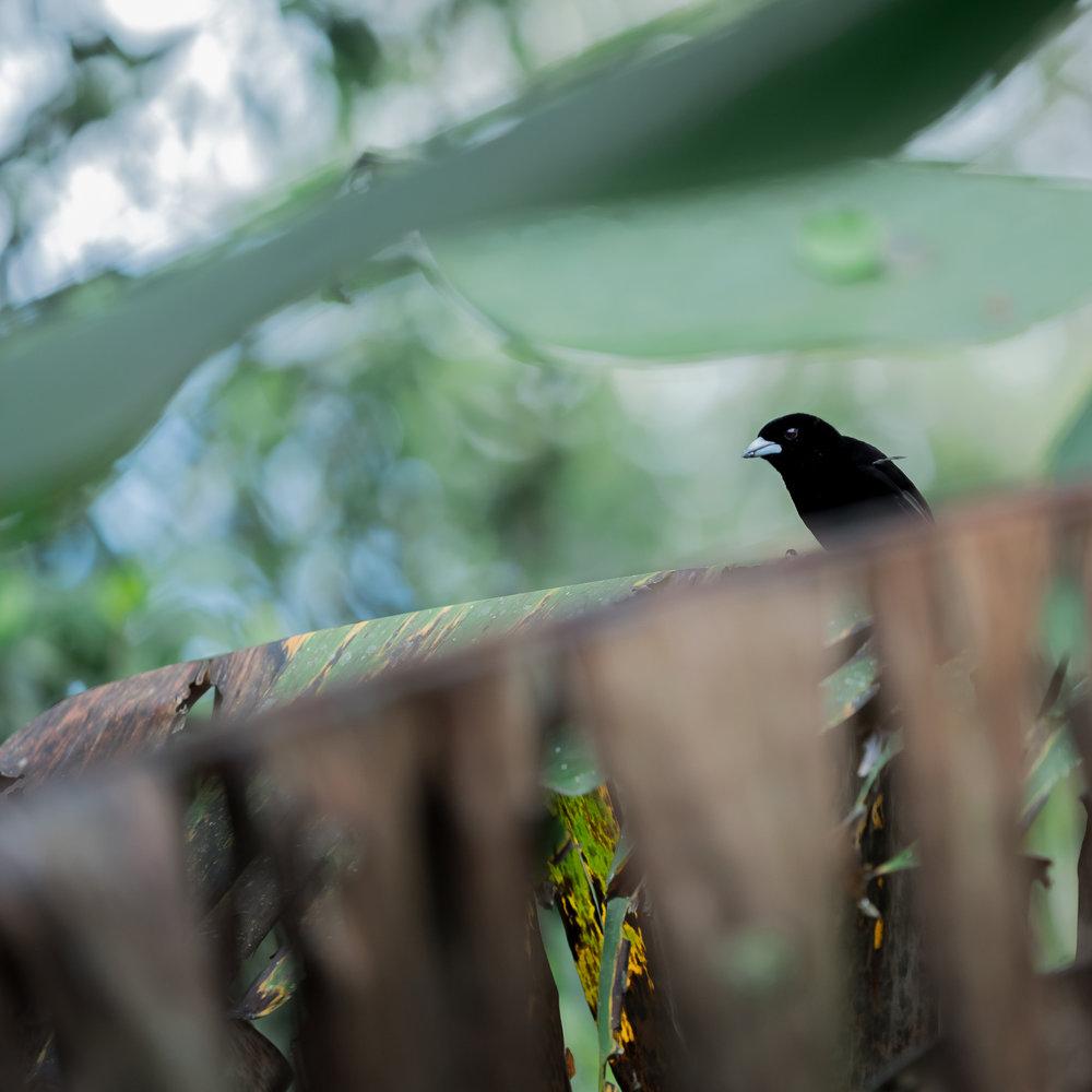Fine-Art-Photography-Collection-birds-2