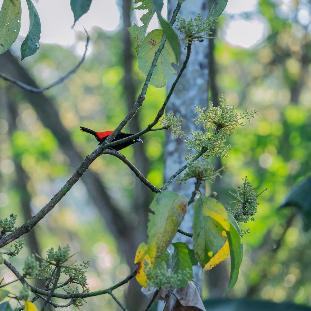 Photography-Fine-Artworks-Collection-Birds3.jpg