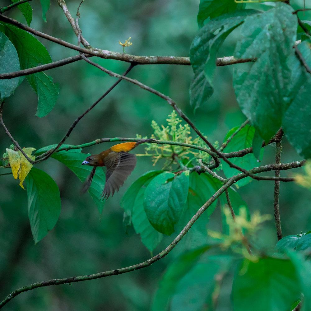 Fine-Artworks-Collection-Photography-Birds4.jpg