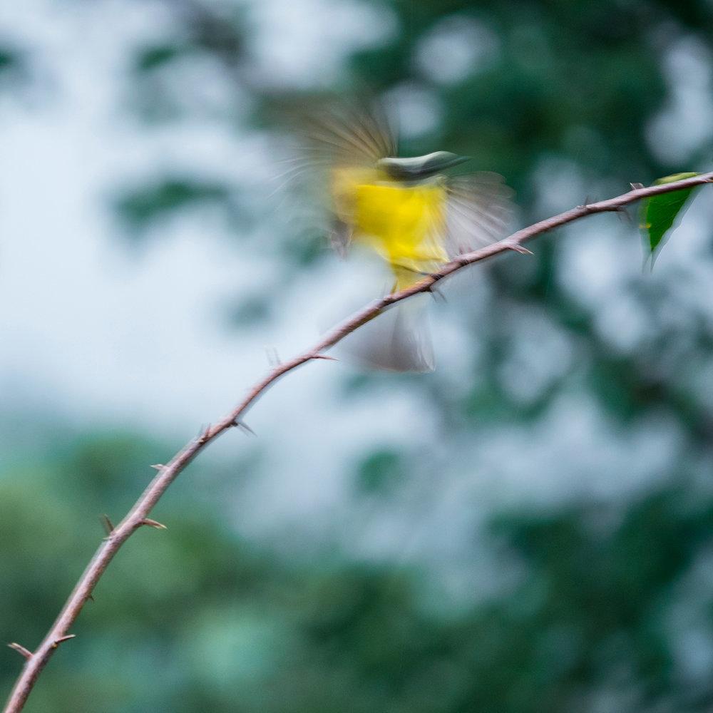 Artworks-Collection-Photography-Fine-Art-Birds5.jpg