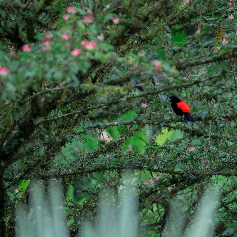 Fine-Artworks-Collection-Birds6.jpg