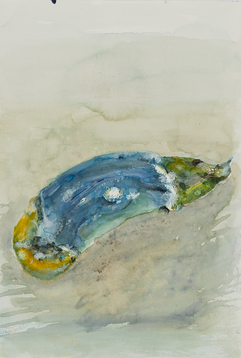 mould study (cucumber), 2017 | watercolours on paper, 25x18 cm