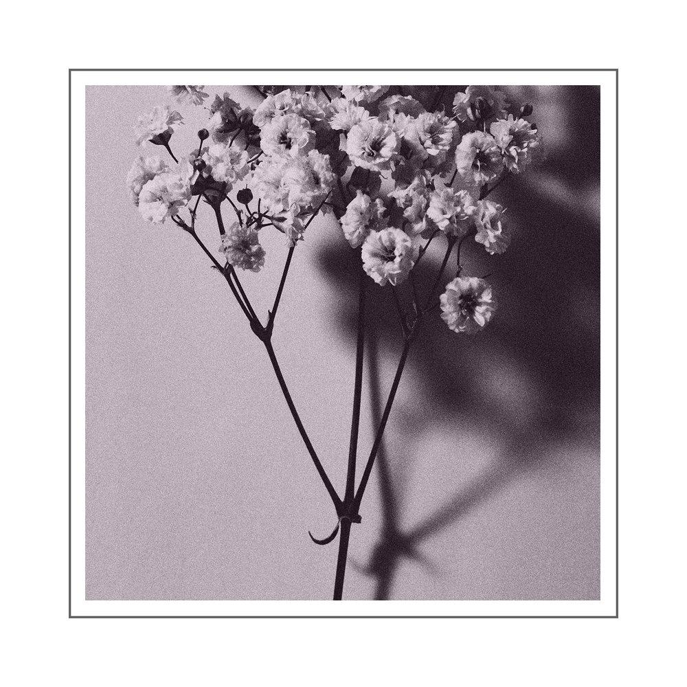 Schofield-Small-Flowers-Pink.jpg