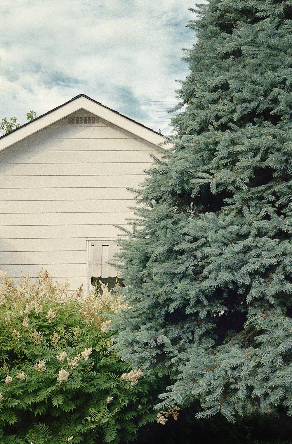 Schofield-Ashton-Nature-Suburbia-08.jpg