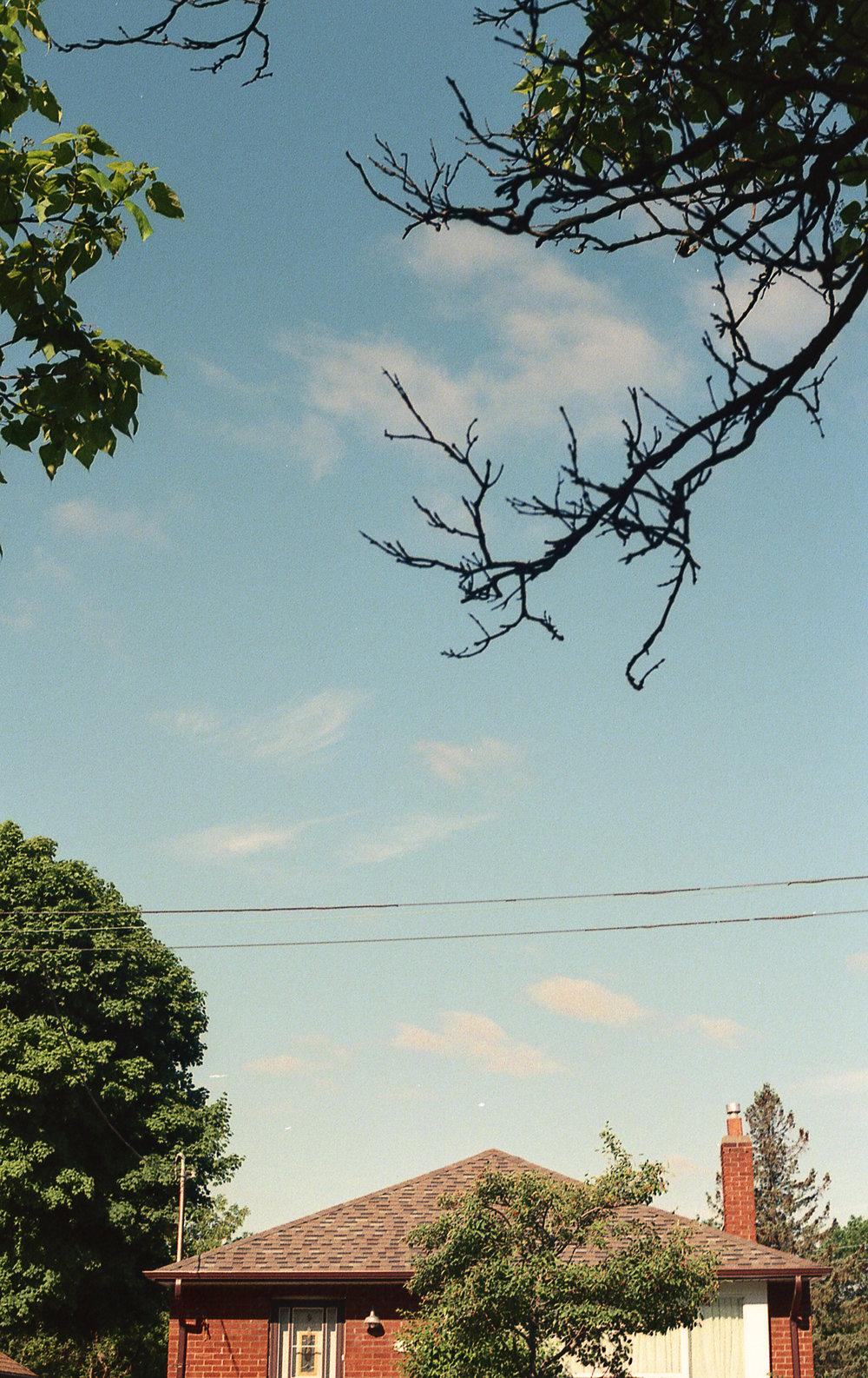 Schofield-Ashton-Nature-Suburbia-48.jpg
