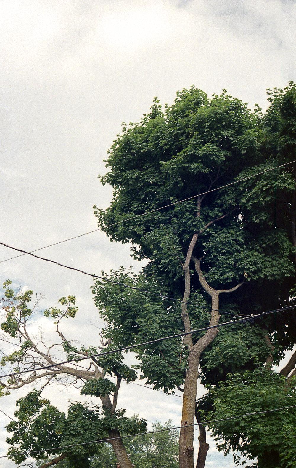 Schofield-Ashton-Nature-Suburbia-65.jpg