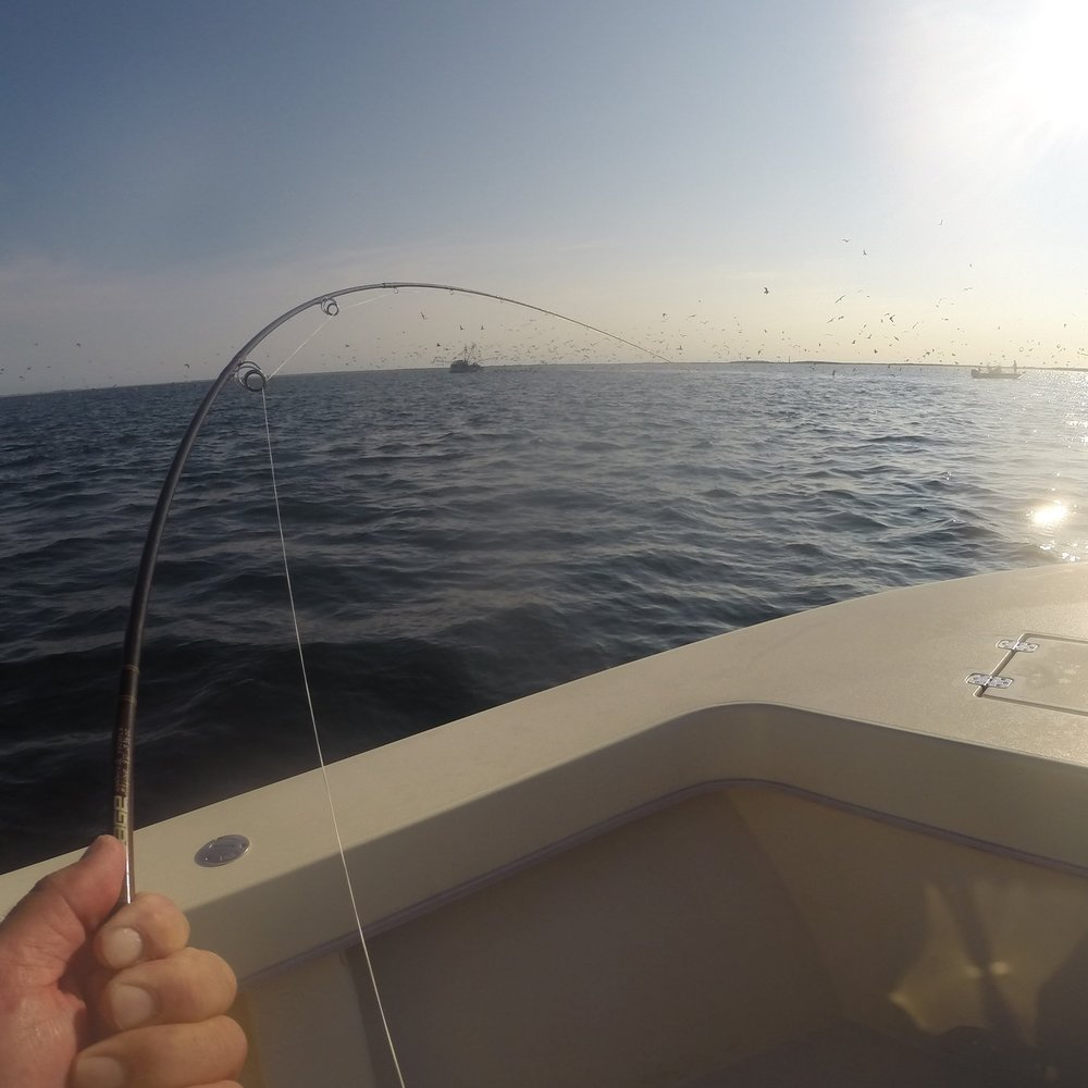 Long Island Sound Fly Fishing