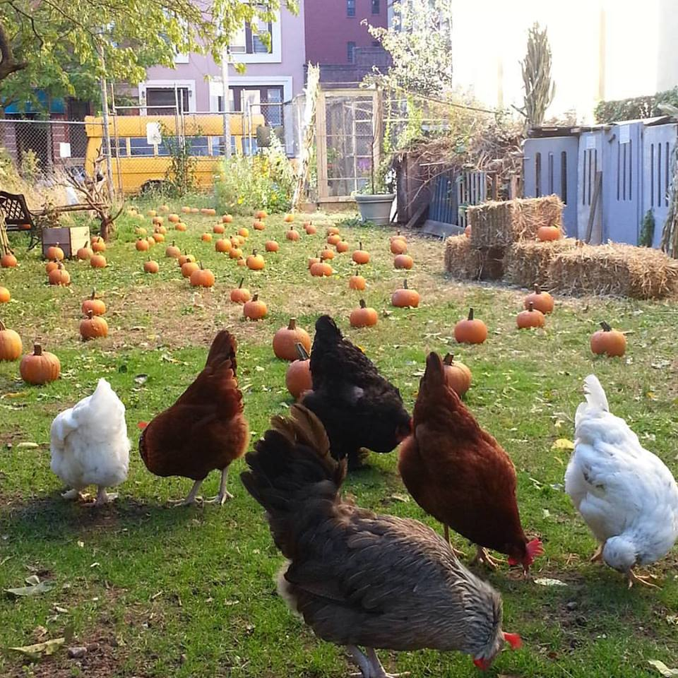 Photo from Christine Johnson, of Pleasant Village Community Garden hosting it's annual Halloween pumpkin patch event.