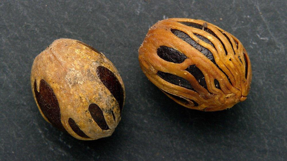Nutmeg and Mace E 2000.jpeg