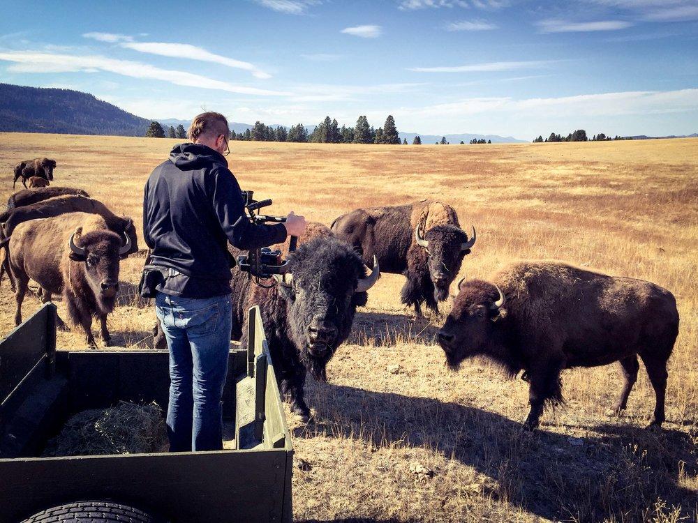 Buffalo Bison Kittitas Ellensburg