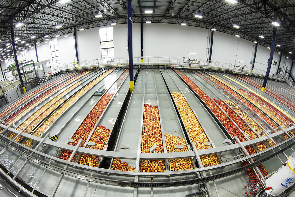 Sorted Apples Floating in Separated Lanes - Fisheye.jpg