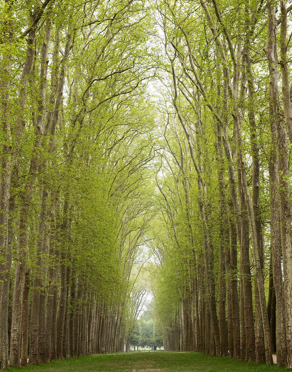 Trees in Versailles