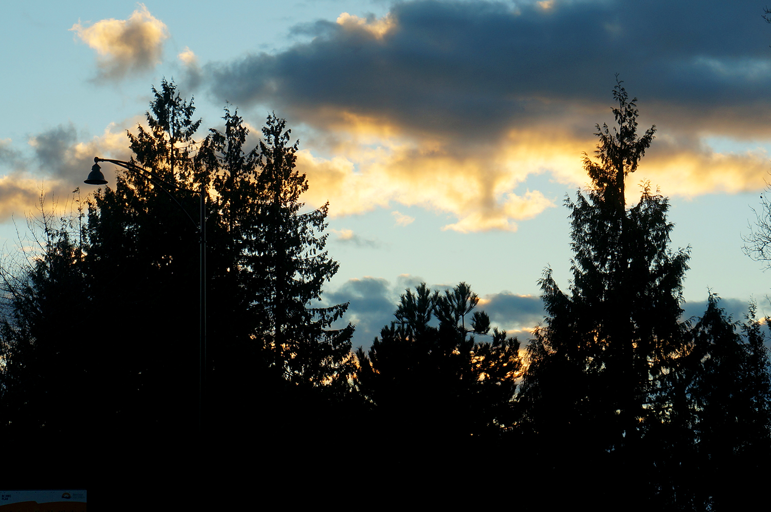 Sunset with pine tree silhouettes