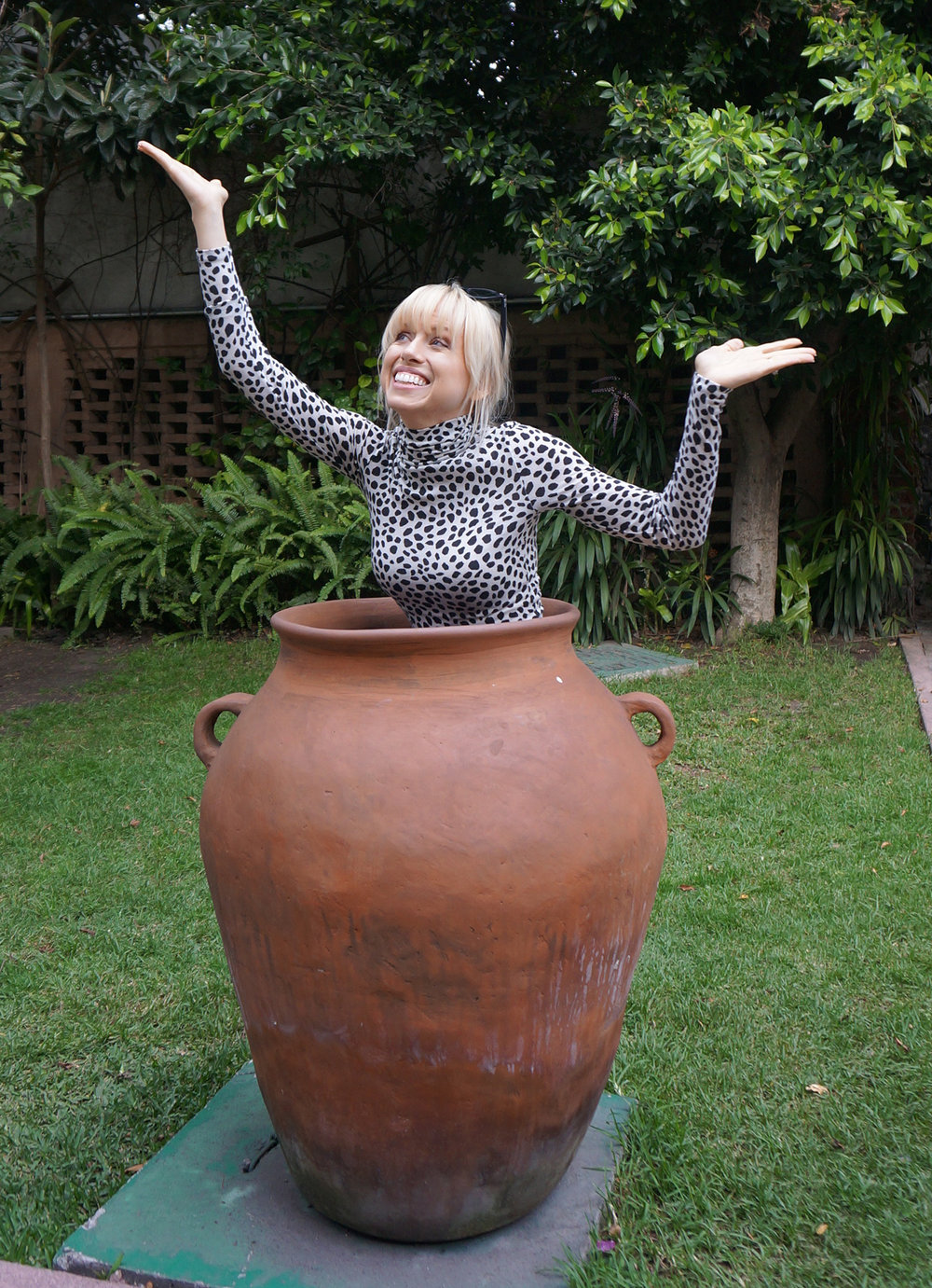 Superholly inside of a clay pot