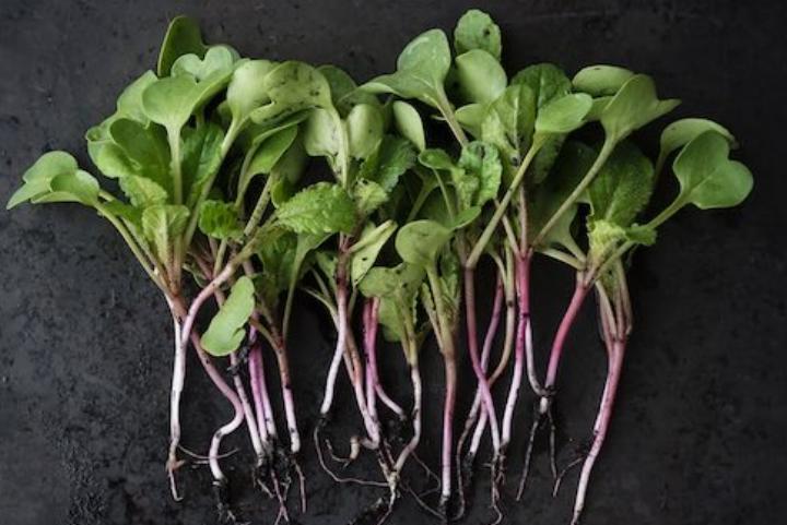 Nutrient dense -
