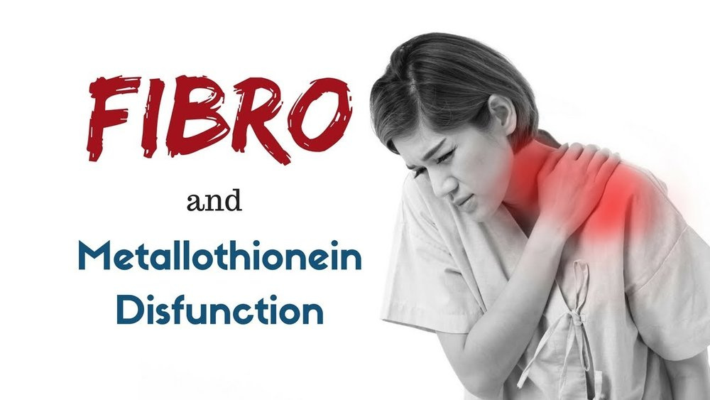 fibro and metallothionein.jpg